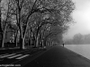 Trees_9411
