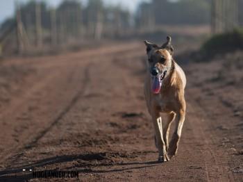 Luna walking