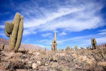 Cactus in Ticara