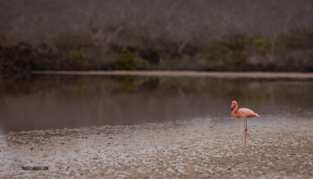 We did not expect to see flamingos here. Nice surprise!