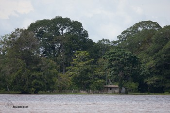 Little house tucked away under trees ont he banks of the Amazon.